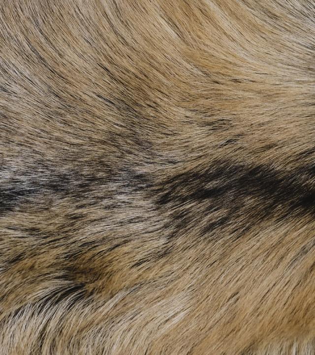 Texture de fourrure - Fourrures Grenier